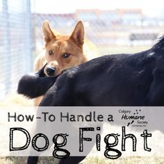 How to Handle a Dog Fight | Calgary Humane