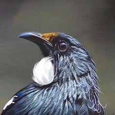 Tui (Prosthemadera novaeseelandiae) Exotic Birds, Colorful Birds, Bird Pictures, Pictures To Draw, Beautiful Birds, Animals Beautiful, Tui Bird, Bird Illustration, Illustrations