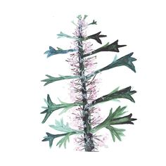 Lily Niauri #flower #summer #plant #green #bloom