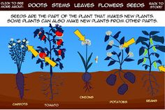Interactive Education: Interactive Plant Parts