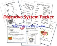 Human Body study: Digestive system free printables. Has links to other systems also.