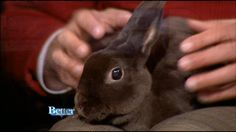 Great Scot: The House Rabbit Connection and Furry Friends
