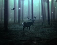 Learn how to create a dark, emotional deer photo manipulation in Photoshop. In this tutorial you'll learn how you can combine different stock images...