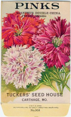 PINKS! (Double Mixed) Vintage Flower Seed Packet Tuckers Seed House Lithograph (Carthage, Missouri)