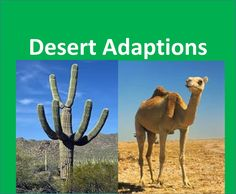 Desert Plants and Animals adaptations -For Kids