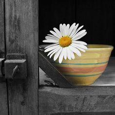 My favorite bowl!!! My favorite flower !