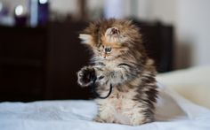 Cute kitty playing. follow @galaxycases to see more cutest animals kids ....