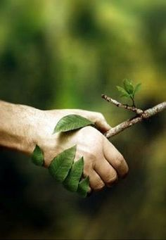kfigher: #design #shakehand #nature #デザイン ViaBe a friend to the trees and to all living things うまい