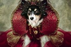 Homeless dogs pose in outlandish costumes to attract new owners Shelter Dogs, Animal Shelter, Rescue Dogs, Animal Rescue, Smithsonian Photo Contest, The Shelter Pet Project, Dog Poses, Homeless Dogs, Animal Magic