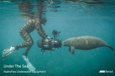 """""""Under The Sea"""" - view our HydroFlex product range here -> http://arrirental.com/Hydroflex/landingPage.html. And thanks to Wildlife filmmaker and photographer Cristian Dimitrius for the shot – captured on an AMIRA in a HydroFlex MK5 camera underwater housing. #Underwater #HydroFlex #ARRIRental #wevegotyoucovered"""