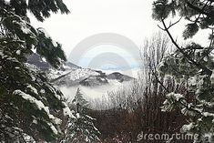 Photo about Nice view between two trees with snow on branches of a valley with fog along it in a cold winter day. Image of valley, green, nice - 82042787 Two Trees, Winter Scenery, Winter Day, Cold Day, Nice View, Branches, Snow, Stock Photos, Photography