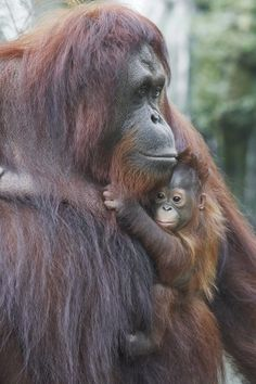even if the baby is ugly it melts my heart