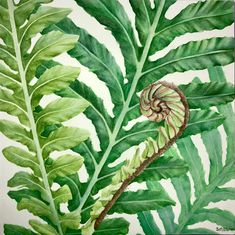 """Emerging fern fronds"" by Sharon Egan. Paintings for Sale. Fern Frond, Buy Art Online, Paintings For Sale, Watercolour Painting, Ferns, Online Art Gallery, The Good Place, Original Artwork, Plant Leaves"