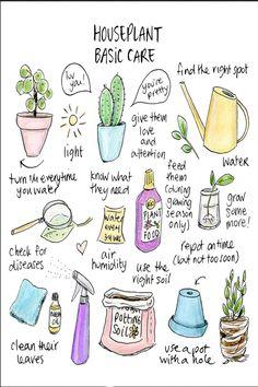 Garden Plants, Indoor Plants, Indoor Garden, Herb Garden, Pot Plants, Side Garden, Succulents Garden, Pot Jardin, House Plant Care