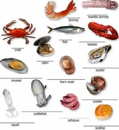 Learning the vocabulary for some basic seafood English lesson