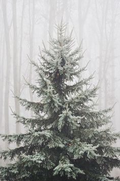 i love a real Christmas tree! Did you know of real Christmas Trees in America come from tree farms? Christmas Time Is Here, Noel Christmas, Winter Christmas, All Things Christmas, Winter Holidays, Little Christmas, Whimsical Christmas, Winter Love, Winter Solstice