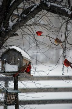 birds in the winter time