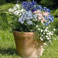 Summer Container gardens for Texas.  Find out how to create the perfect combinations.