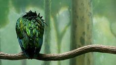 greenbird...