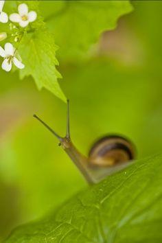 Snail LOOK IN ALEHPINKK http://www.pinterest.com/Alehpinkk/
