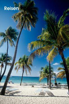 Club Med • Das Resort La Caravelle auf Guadaloupe bietet Familienerholung an einem 450 Meter langem Sandstrand. Kinderbetreuung wird schon ab zwei Jahren angeboten und die Windsurfschule in einer Bucht gelegen bietet ideale Trainingsverhältnisse. Die Tennisschule bietet Gruppenkurse ab vier Jahren an und zudem können Ausflüge nach Les Saintes und mit dem Katamaran zu den Inseln der...  Bilderserie anzeigen: http://www.imagesportal.com/newsletter/current/newsletter35.php