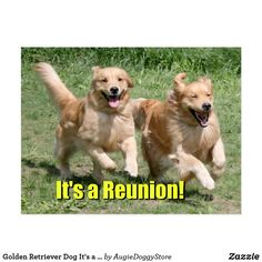 165 best golden retriever greeting cards postcards images on golden retriever dog its a reunion announcement postcard m4hsunfo