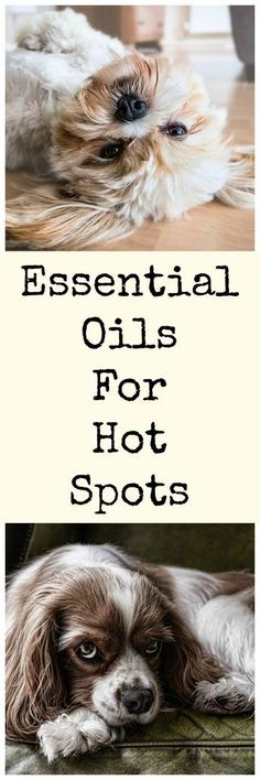 Essential oils for hot spots in dogs.