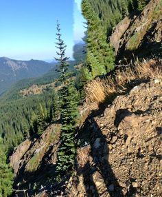 Rosy Eagle's 2014 Pacific Crest Trail Photos : View from Trail