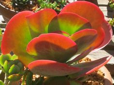 understanding drought tolerant plants to improve water wise gardening in Mediterranean climates Water Wise, Drought Tolerant Plants, Decorating Ideas, Gardening, Lawn And Garden, Horticulture