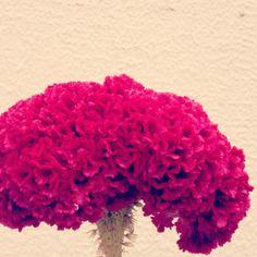 Dead fleurs