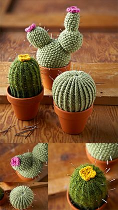 I love to have these cute little things in my window. These cactus knitting design is awesome and FREE. Can't wait to start the project. Knitting Designs, Knitting Projects, Crochet Projects, Knitting Patterns, Crochet Patterns, Kawaii Crochet, Crochet Toys, Free Crochet, Knit Crochet