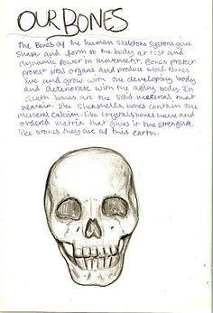 Waldorf ~ 8th grade ~ Human Anatomy ~ Bones ~ main lesson book