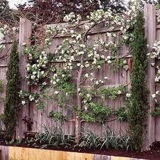 I like this idea for a fence.
