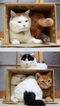 CATS IN A BOX :)