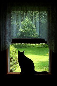 Window sill silhouette.