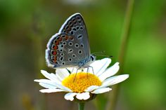 butterfly - null