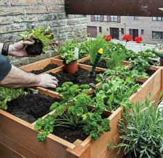 Image result for intensive balcony planting