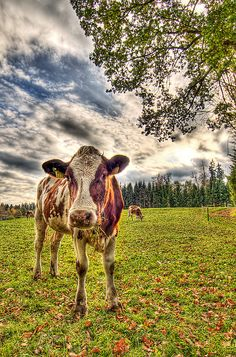 cow! im not vegan any more. too hard in a world were animal products are in everything. I am still totes vegetarian forever!