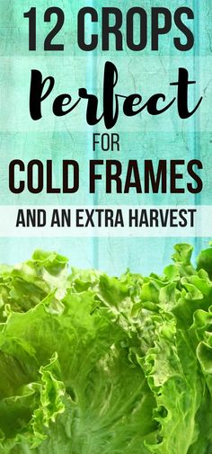 Great vegetable gardens for beginners ideas! 12 crops you can grow in cold frame. - - Great vegetable gardens for beginners ideas! 12 crops you can grow in cold frames for raised beds. Cold frames gardening just got easier! Vegetable Garden Planner, Vegetable Garden For Beginners, Gardening For Beginners, Gardening Tips, Gardening Magazines, Gardening Services, Gardening Gloves, Growing Tomatoes Indoors, Growing Tomatoes In Containers
