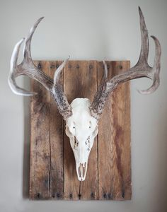 Whitened skull with weathered wood wall plaque. Plaque includes mounting hardware and skull mounting bracket.