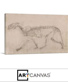 Ready-to-hang Tiger Skeleton - Lateral View 1806 Canvas Art Print for Sale canvas art print for sale. Free hanging accessories and insurance. Art Prints For Sale, Canvas Art Prints, Skeleton, Accessories, Skeletons, Ornament