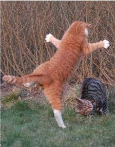 Dramatic interpretive dance cat . . .