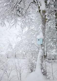 *~Winter in Blues~*