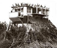 Mobile Pigeon Loft - First World War