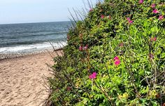 The Hamptons 38: The Very Best of the East End