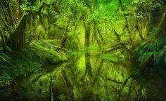 Photo Paradise Forest Queets Rainforest Washington - Marc Adamus