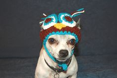 crochet owl hat for dogs! and its on a chihuahua! love it!
