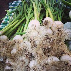Green garlic - ajo verde