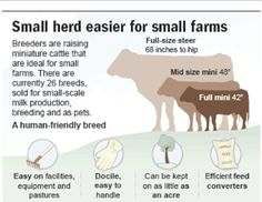 Don't have a back 40? Try mini-cattle. more info: http://www.hobbyfarms.com/livestock-and-pets/raising-small-cows-15001.aspx different breeds: http://www.minicattle.com/index.cfm?select=breedsowners nbc article and graphic: http://www.nbcnews.com/id/10697287/ns/business-retail/t/dont-have-back-try-mini-cattle/#.Uay5HeBGIyE
