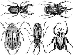 This listing is for one approximately 5.25 inch x 4 inch (13.3 x 10 cm)  sheet containing 5 large and detailed scarab beetle decals. The decals are  on average 2.5 inch long (6.35 cm). These scarabs are part of our hi-fire  (cone 5/6) inglaze decal collection for ceramic artists! Share a studio  kiln? These hi-fire decals offer you flexibility to fire at higher temps  typically used in ceramic studios.  The decals can be used with ceramic and porcelain. They cannot be used for  glass…